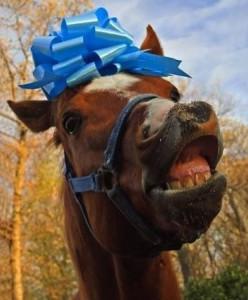 dumb-horse