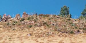 Neenach Formation